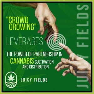 diversification into crowdgrowing